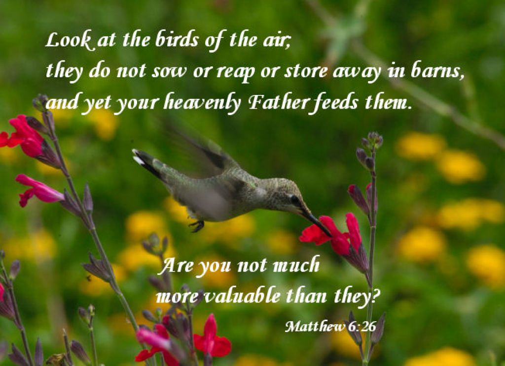 Look at the Birds of the Air Matthew 6:26 Image