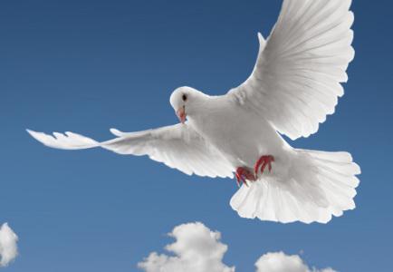 Photo of Holy Spirit