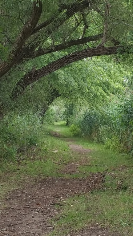 green path in woods
