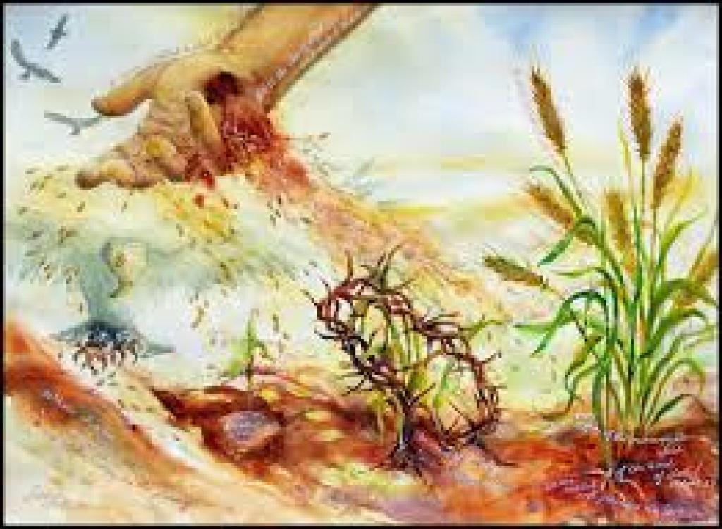 """""""The seed is the word of God, Christ is the sower."""""""